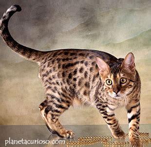 imagenes que se mueven gatos 191 por que mueven la cola los gatos planeta curioso