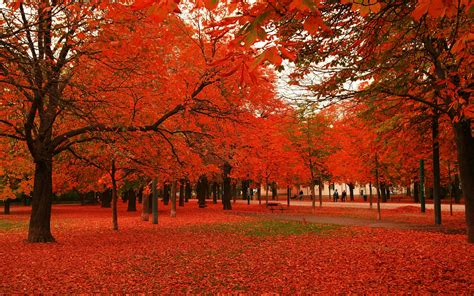 autumn trees and leaves red leaves autumn trees desktop wallpaper autumn pinterest trees