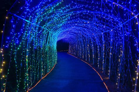 lights in bloom at selby gardens news sarasota