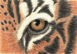 wild about art tiger s eye workshop