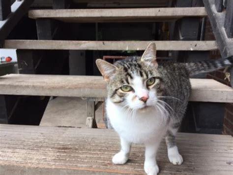 kastration kater wann katze gefunden zugeflogen stadt m 252 lheim an der ruhr