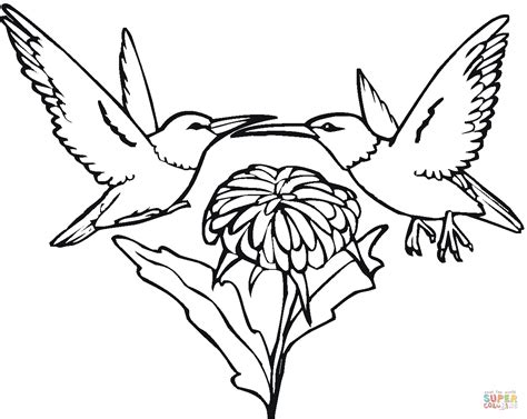 coloring pages hummingbirds flowers two hummingbirds and flower coloring page free printable
