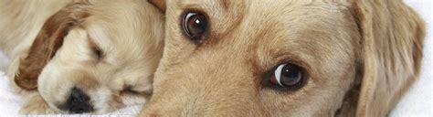 ckc dogs dogs ckc