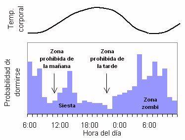 oscilacion temperatura corporal curiosidades onocentauros p 225 gina 7