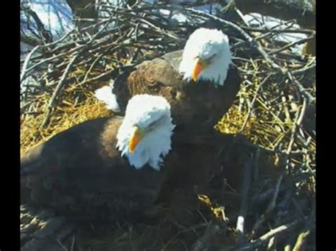 mn bound eagles 2 24 15 cam goes live for 2015 season