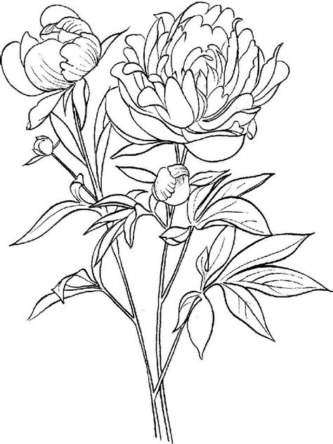 flower color pages peony flower coloring pages and print peony