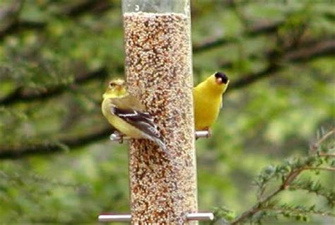 top 40 ideas about birds of western north carolina on