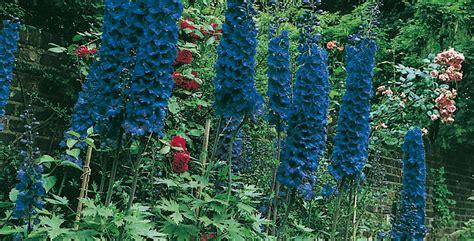 fiori per bordure perenni piante perenni le variet 224 migliori per bordure e rocciati