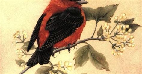 Painting Songbirds With Sherry C Nelson sherry nelson decorative painter by sherry c nelson from