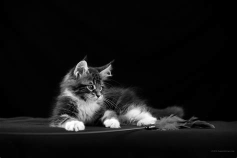 cat wallpaper tablet 2160x1440 cat wallpaper exquisite free wallpaper images