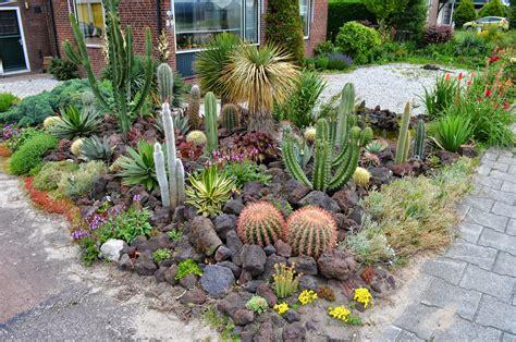 Cactus Rock Garden Gypscoprotheres Landelijke Cactus En Vetplantendag Bij Ubink In Kudelstaart