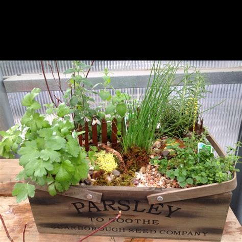 Mini Herb Garden | mini herb garden with tools nature decor pinterest