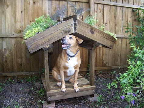roof dog green roof dog house plans numberedtype