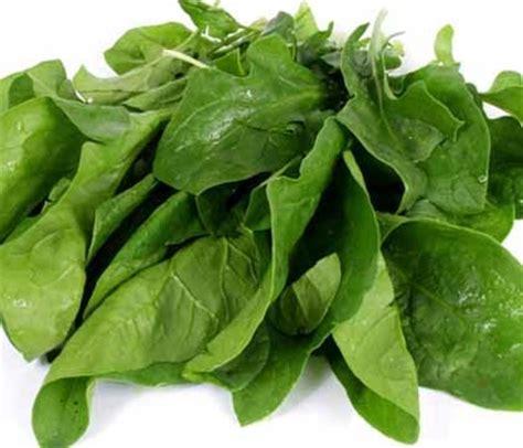 imagenes de hojas verdes comestibles nutrici 243 n durante el embarazo alimentos ricos en hierro