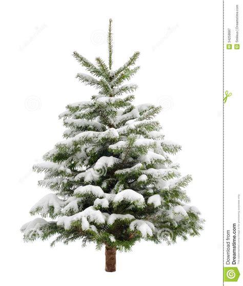 perfekter kleiner weihnachtsbaum im schnee lizenzfreie