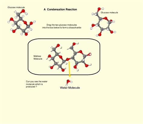 draw diagrams to illustrate condensation and hydrolysis reactions condensation hydrolysis