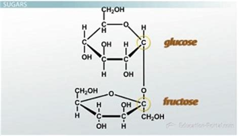 carbohydrates structure and function structure and function of carbohydrates lesson
