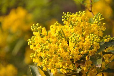 fiori di marzo 15 splendidi fiori di marzo fito