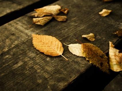 wallpaper daun gugur daun musim gugur wallpaper alam alam wallpaper download gratis