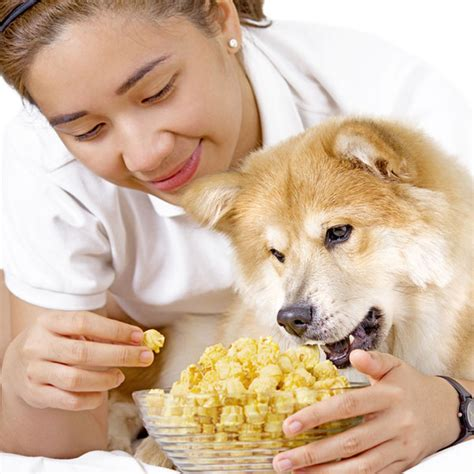 popcorn for dogs can dogs eat popcorn