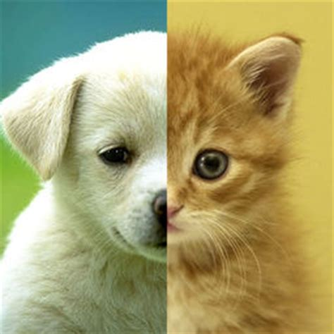 worldwide puppies and kittens wallpaper apps for ios