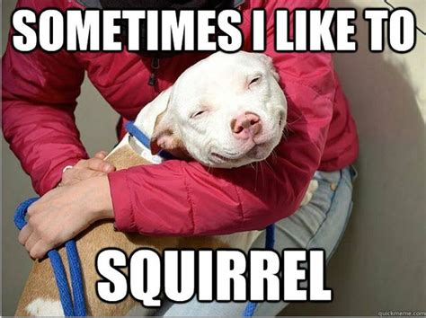 Doggy Meme - funny dog pictures with memes memes