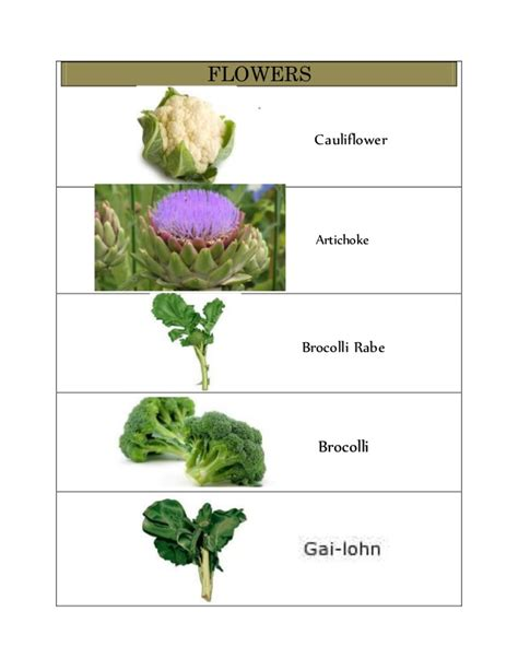 6 fruit classifications classification of vegetables