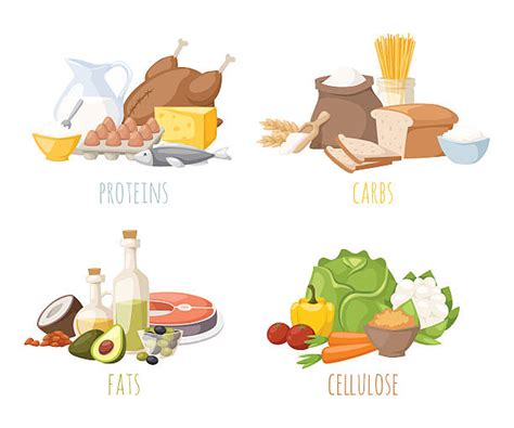 foods w carbohydrates protein clip vector images illustrations istock