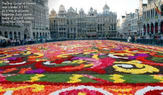 Flower Carpet Brussels Biennial Flower Carpet Blooming Begonia