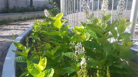 kembang jepang taman tugu adipura sengaja dicabut