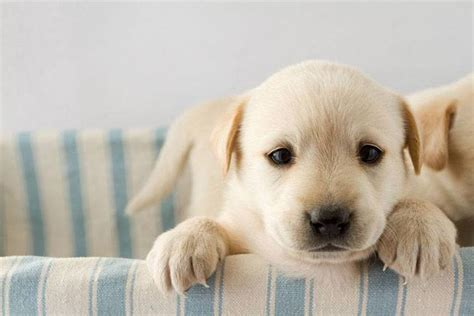 uncommon golden retriever names golden retriever names unique ideas