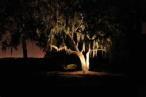 landscape tree lighting oak tree lighting landscape charleston by moonlighting landscape lighting systems