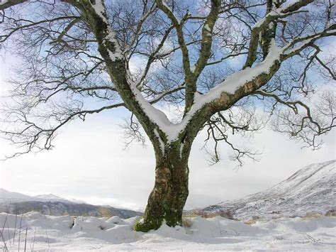 winter tree winter the time of roots growing beneath the soil caroleeena s circles of