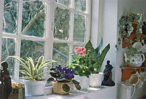 winter care  houseplants