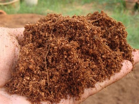 fiber soil coconut coir what it is how to use it and the best