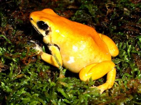 7 Most Poisonous Animals by Deadliest Animal In The World Www Pixshark Images