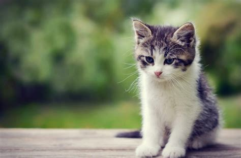 wallpaper whatsapp cats tag for cutest cat whatsapp images merry christmas dp