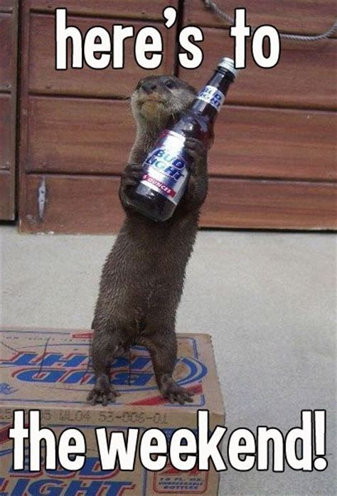 Memorial Day Weekend Meme - yay weekend aw thanks nice otter animals i cherish