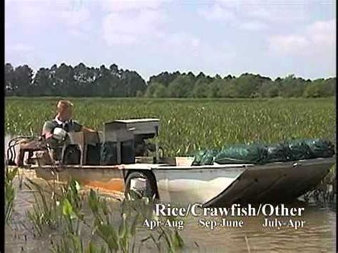 backyard crawfish farming backyard crawfish farming how to build a small scale