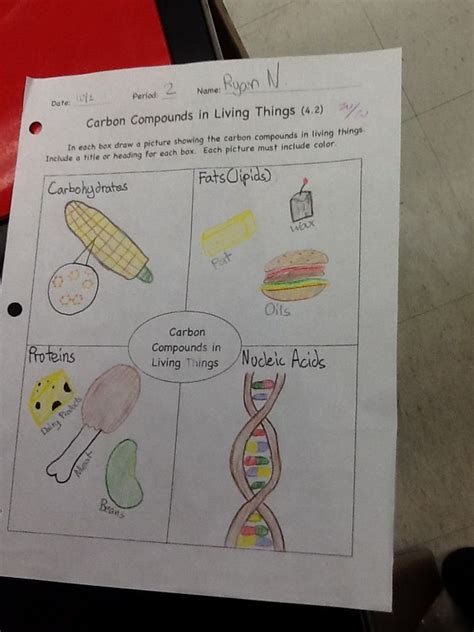 carbohydrates 7th grade science 17 best images about 7th grade science on bill