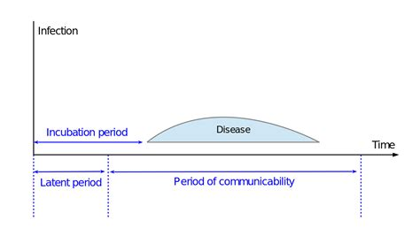 what is the gestation period for a incubation period