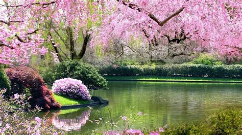 pics of spring springtime of my heart islamicity