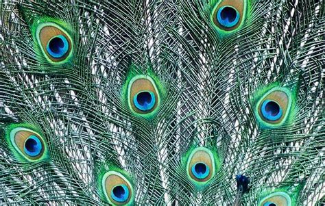 pictures of pattern in nature 12 best images about visual stimulus patterns in nature
