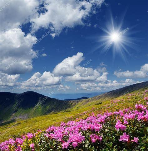 immagini paesaggi fioriti prati fioriti in montagna foto stock 169 kotenko 48427199