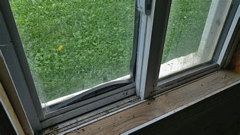 house window seals window issues with hermetic seals
