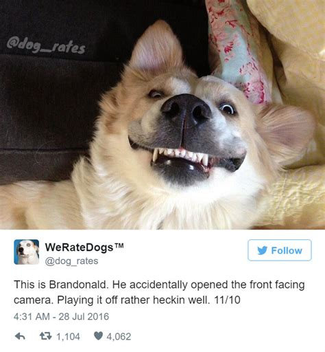 dogs rate this rating account is bizarrely hilarious theplunder