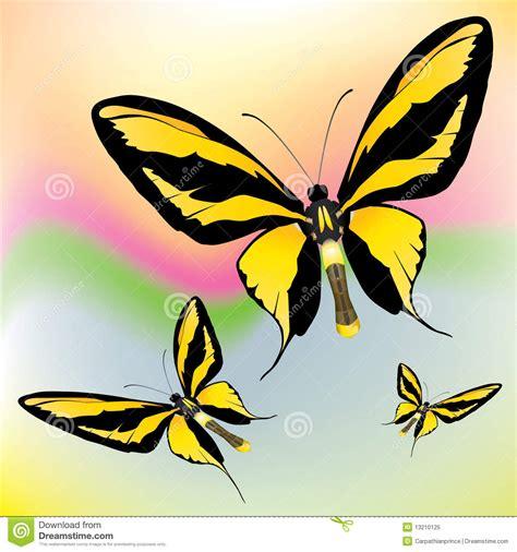 imagenes mariposas exoticas mariposas ex 243 ticas foto de archivo libre de regal 237 as