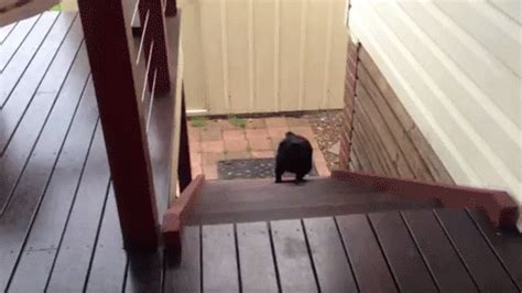pug running up stairs 20 things that happen when you don t wear a bra