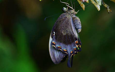 Fonds d'écran Papillons gratuits