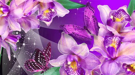 imagenes de orquideas muy bonitas significado de so 241 ar con orquideas youtube